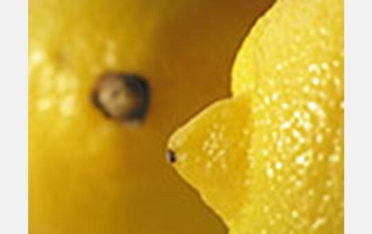 Ailimpo proposes that the organic food industry replace citric acid (E-330) with organic lemon juice
