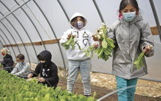Micah Roseberry: Growing organic food for our community | Environment