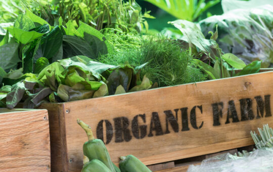 Organic food in France not always 'better quality' study finds