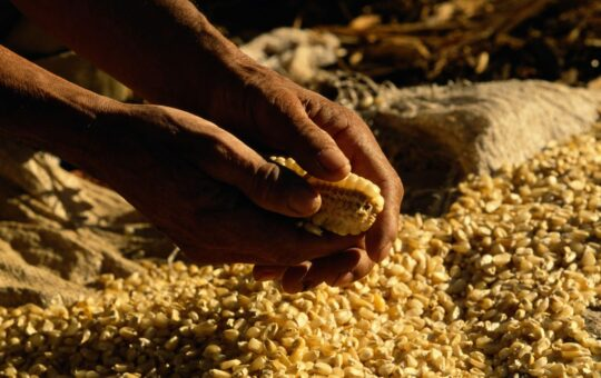 Three Ways To Invest In Indigenous Foodways To Impact Food Security